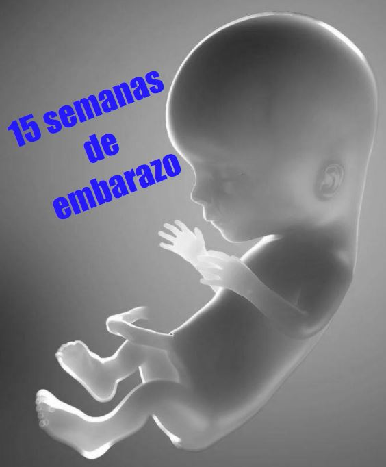 799421626 Tu embarazo: 15 semanas de gestación