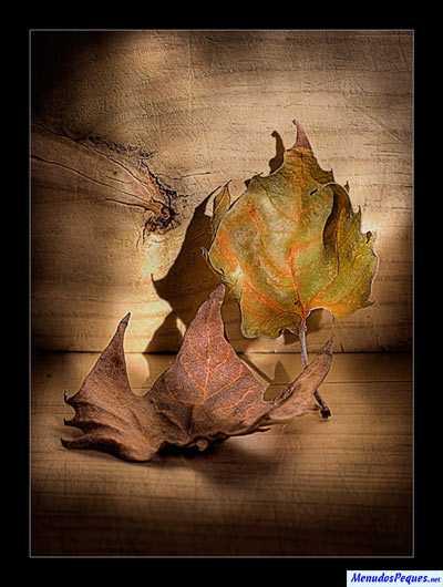hojas secas otoño