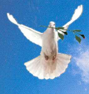paloma de la paz, día de la paz