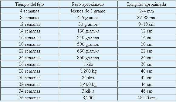 Tiempo, peso y longitud del feto en el transcurso del embarazo