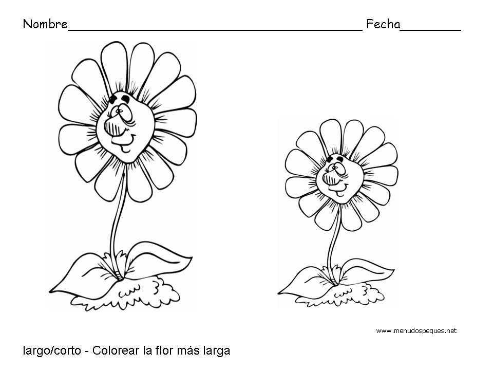 Largo Y Corto Flores Fichas De Conceptos Básicos