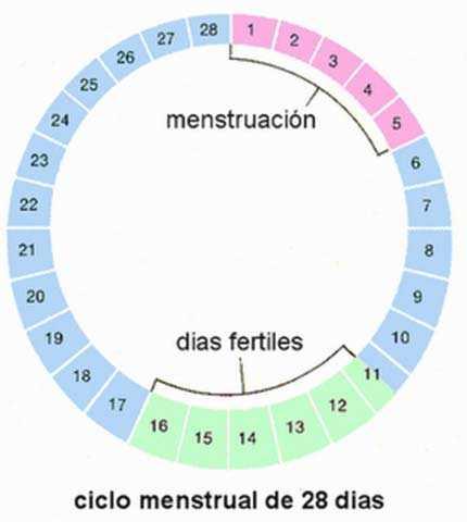 Calcular Dias Ovulacion Regla Irregular Como Determinar Tus Días Fértiles Cheat Menstruo Parttime